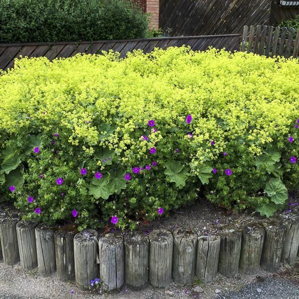 plantering
